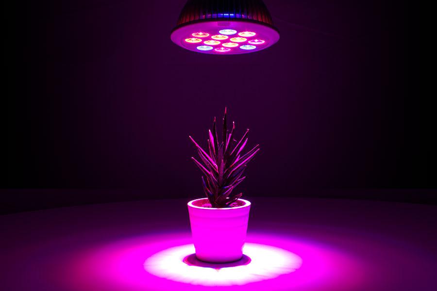 Led Pflanzenlampen Top 6 Test Vergleich 2020 Ledtest
