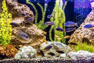 Fische schwimmen im Aquarium